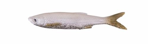Savage Gear LB 3D Bleak Real Tail - White Silver - 5pcs - 8cm 3g - White Silver